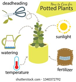 Tutorial how to care for potted plant. Succulents in pot, elements for care: deadheading, watering, temperature, fertilizer, sunlight.
