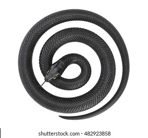 Twisted Black Snake on White Background. 3D illustration