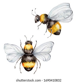 Two bees; watercolor hand draw illustration; with white isolated background