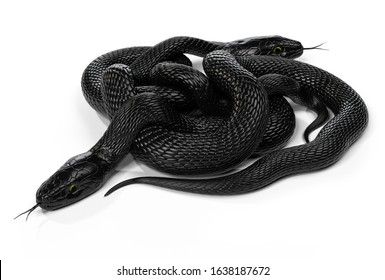 Two Black Snakes in a Knot isolated on White Background. 3D illustration