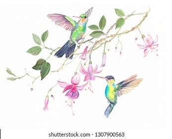 Two colibri hummingbirds in pink flowers watercolor.