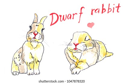 Two colourful dwarf rabbits with hand drawn title above and a pink heart.