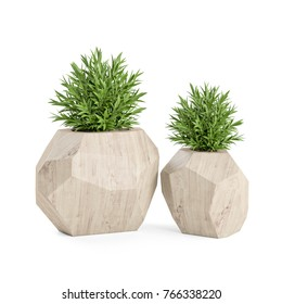 Two decorative plant in the wooden pot isolated on white background. 3D Rendering, Illustration.