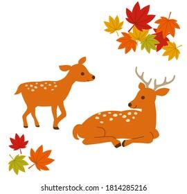 秋の風物詩。