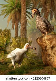 Two dodo birds stand in the tropical environment of the island of Mauritia.  Now extinct, the flightless birds heedlessly wander around through the palm trees. 3D Rendering
