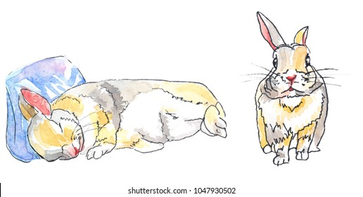 Two dwarf bunnies, one sleeping on a pillow, the other standing.