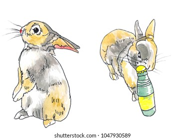 Two dwarf rabbits, one is bitting a bottle, the other is standing.