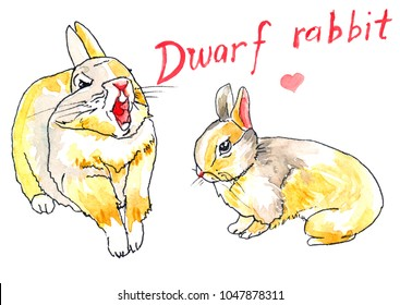 Two dwarf rabbits with yellow, white, and grey fir, one is yawning, the other is sitting side-face.