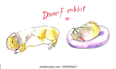 Two dwarf rabbits with yellow, white, and grey fir are sleeping.
