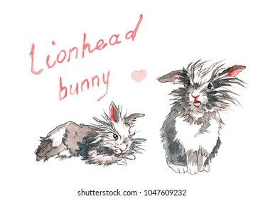 Two fluffy lion-head rabbits with grey, brown, and white fir, one lying, the other sitting, with a hand drawn title above and a pink heart.