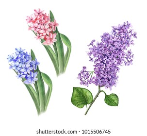 Two Hyacinths and Lilac watercolor illustration isolated on a white background suitable for spring design