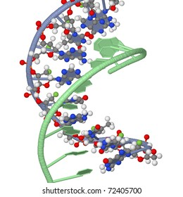 two isolated DNA chains
