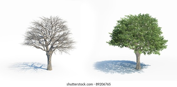 Two isolated trees with and without leafs