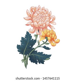 Two Japanese chrysanthemums. Isolated element for design