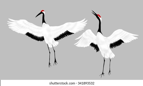 Two Japanese cranes with red crowns