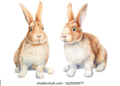 Two little bunnies on an isolated white background, watercolor illustration, cute animal, easter bunny. rabbits