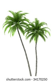 two palm trees isolated on white background. 3d illustration