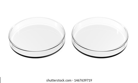 Two petri dishes isolated on white background. 3d Illustration. Empty.