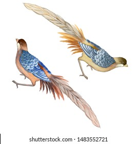Two pheasants. Birds in the style of chinoiserie on a white background.
