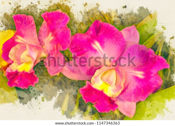 Two pink cattlyea orchids,digital watercolor style