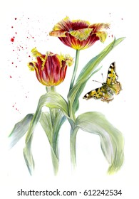 Two red Terry Tulip, watercolor sketch, isolated, with a butterfly