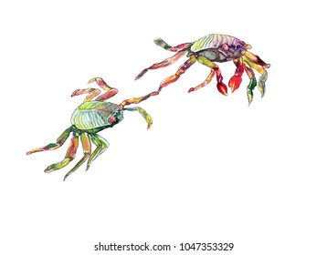 Two sea crabs with colourful shells are holding pincers.