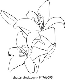 two simple lily flowers on a white background