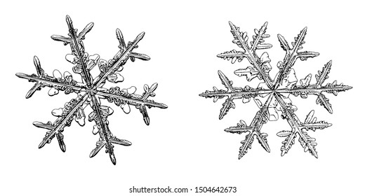 Two snowflakes isolated on white background. Illustration based on macro photos of real snow crystals: elegant stellar dendrites with fine hexagonal symmetry, ornate shapes and complex inner details.