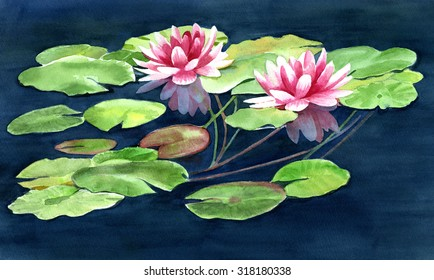 Two Water Lilies with Pads. watercolor hand painted art illustration of two pink water lilies on a dark blue pond with green lily pads.