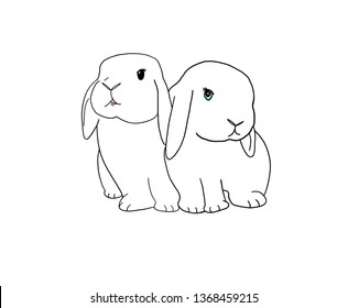 two white holland lop rabbits sitting together drawing line on white background