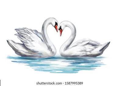 two white Swan birds on a pond together, symbol of love, Valentine's day card, wedding, art illustration painted with watercolors isolated on white background