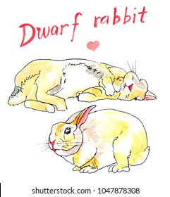 Two yellow and white dwarf rabbits, one sleeping, the other pooping, with hand drawn title above and a pink heart.