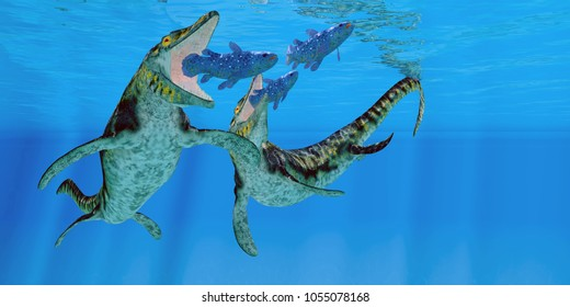 Tylosaurus Marine Reptiles 3D illustration - Coelacanth fish become prey to a pair of Tylosaurus marine reptiles in the Western Interior Seaway of North America.