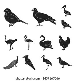Types of birds black icons in set collection for design. Home and wild bird bitmap symbol stock web illustration.
