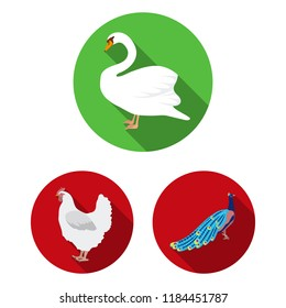 Types of birds flat icons in set collection for design. Home and wild bird bitmap symbol stock web illustration.