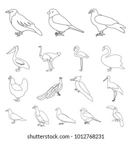 Types of birds outline icons in set collection for design. Home and wild bird bitmap symbol stock web illustration.
