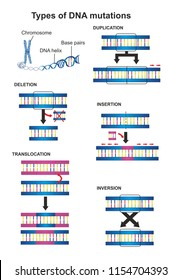 Types of DNA mutations are duplication, insertion, translocation, deletion and inversion.