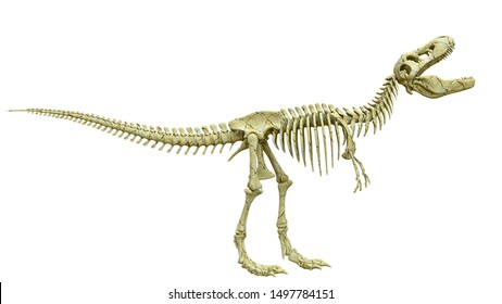 tyrannosaur skeleton is angry side view, 3d illustration