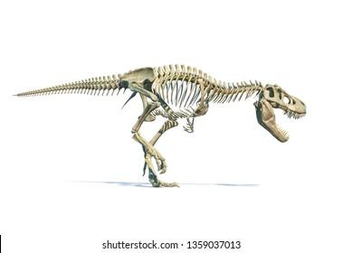 Tyrannosaurus Rex dinosaur photorealistic 3d rendering of full skeleton