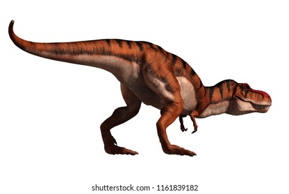 A tyrannosaurus rex looks ready to chase after his prey.  This carnivorous dinosaur has been given a tiger stripe coloration. On a white background. 3D Rendering.