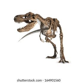 Tyrannosaurus Skeleton isolated. Illustration