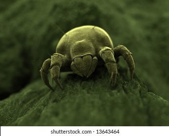 ugly mite