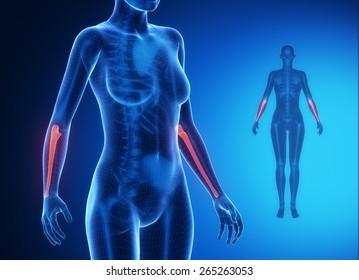 ULNA blue x--ray bone scan