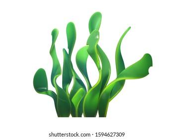 Underwater cartoon spirulina seaweed. Wide green leaves marine plants. Concept art of aquatic plant algae. Underwater world of sea, ocean. Vegetarian food. 3d illustration isolated on white background