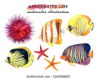 Underwater life set - tropical fish, starfish and sea urchin. Watercolor hand drawn illustration.
