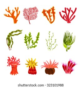 Underwater ocean and aquarium coral decorative icons set isolated  illustration