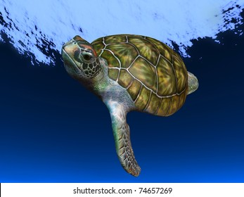 Underwater Picture of the Turtle.