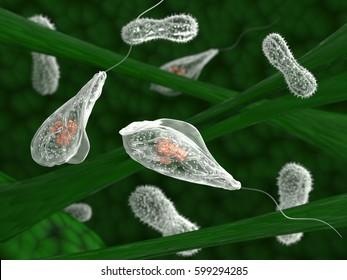 Unicellular microorganisms in the aquatic habitat. 3d illustration