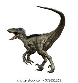 Utahraptor 3D render on isolated white background.