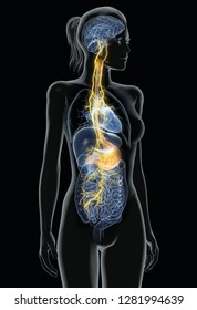Vagus nerve with paiful stomach and digestive system, 3D medically illustration